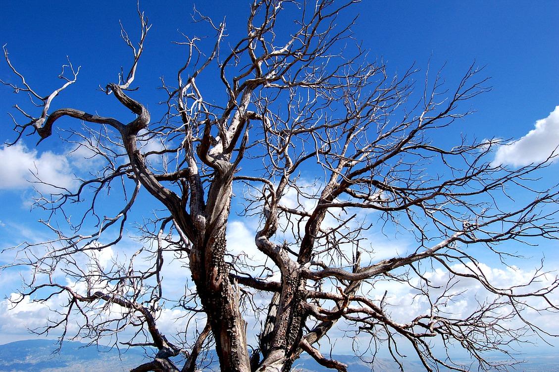 tree-pk